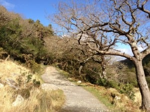 Old Kenmare Road on Torc Mtn.
