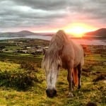 My Cousins Horse on Beentee Mountain...looking over Valentia Island