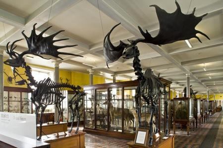 Dublin National Museum Of Natural History