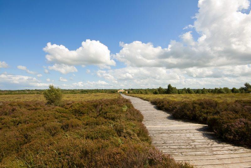 Corlea_Bog_Trackway Longford Irelands Ancient East