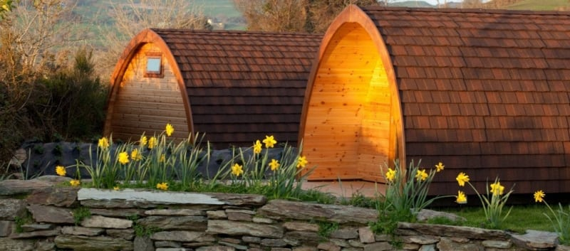 Daffodils outside Pods, Top of the Rock Pod Pairc and Walking Centre, Drimoleague, West Cork, Ireland